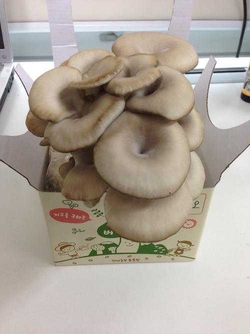 버섯친구 성장 7일째