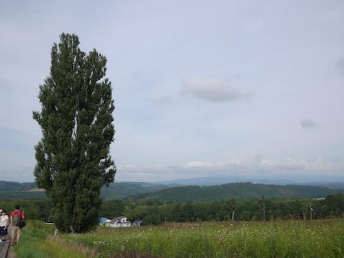 비에이 켄과 메리의 나무